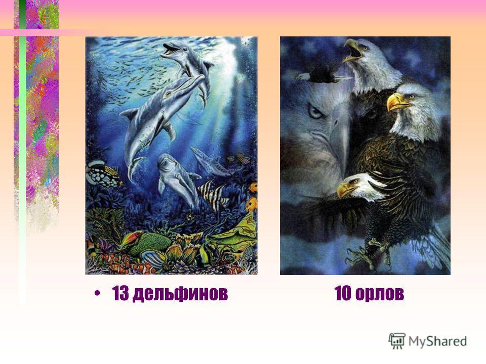 13 дельфинов 10 орлов