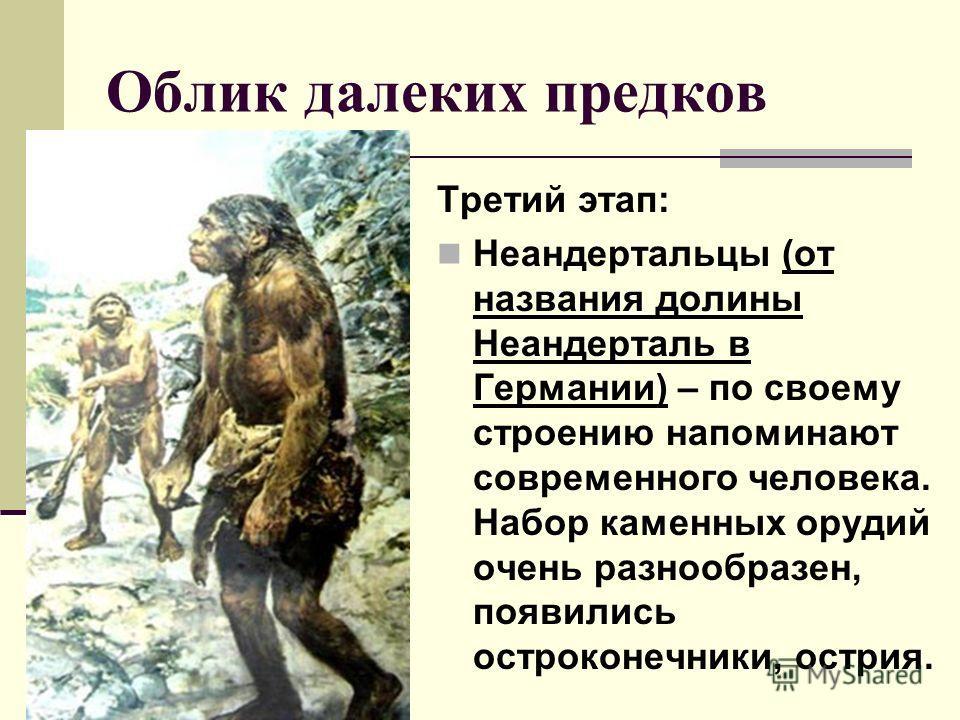 Облик далеких предков Третий этап: Неандертальцы (от названия долины Неандерталь в Германии) – по своему строению напоминают современного человека. Набор каменных орудий очень разнообразен, появились остроконечники, острия.
