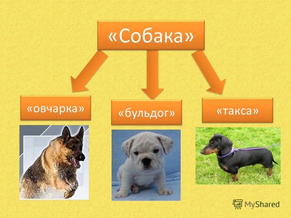 «Собака» «овчарка» «такса» «бульдог»
