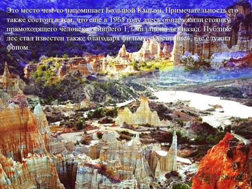 Это место чем-то напоминает Большой Каньон. Примечательность его также состоит в том, что еще в 1965 году здесь обнаружили стоянку прямоходящего человека, жившего 1,7 миллиона лет назад. Публике лес стал известен также благодаря фильму «Обещание», гд