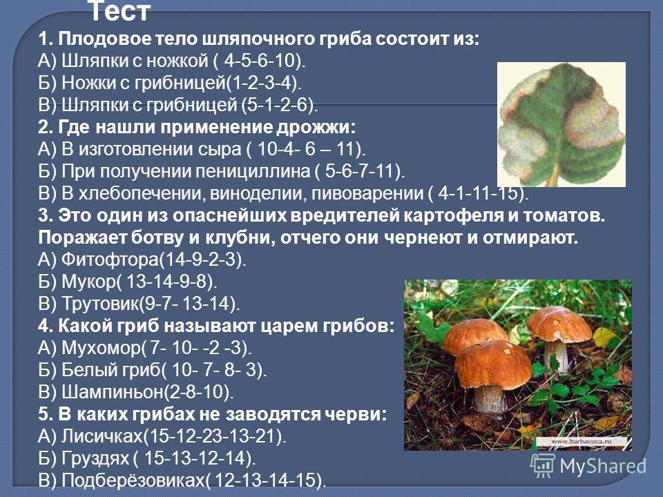 Тест 1. Плодовое тело шляпочного гриба состоит из: А) Шляпки с ножкой ( 4-5-6-10). Б) Ножки с грибницей(1-2-3-4). В) Шляпки с грибницей (5-1-2-6). 2. Где нашли применение дрожжи: А) В изготовлении сыра ( 10-4- 6 – 11). Б) При получении пенициллина (