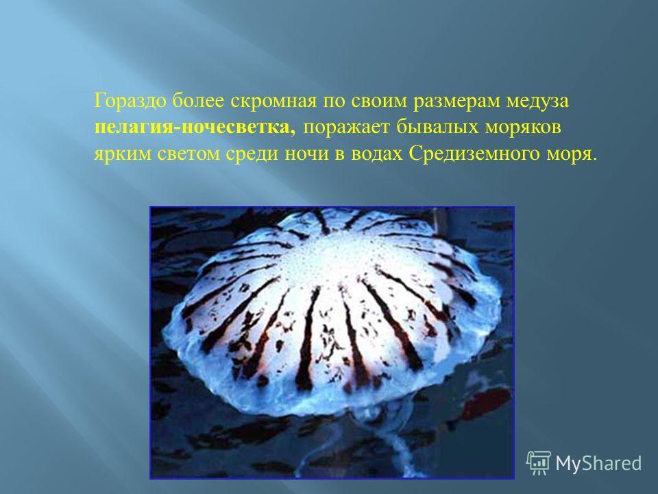 Гораздо более скромная по своим размерам медуза пелагия-ночесветка, поражает бывалых моряков ярким светом среди ночи в водах Средиземного моря.