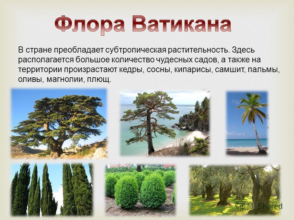 В стране преобладает субтропическая растительность. Здесь располагается большое количество чудесных садов, а также на территории произрастают кедры, сосны, кипарисы, самшит, пальмы, оливы, магнолии, плющ.