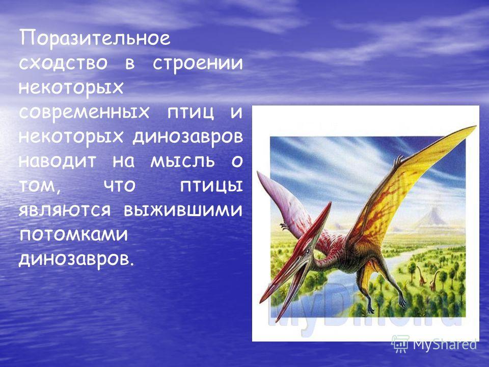 Поразительное сходство в строении некоторых современных птиц и некоторых динозавров наводит на мысль о том, что птицы являются выжившими потомками динозавров.
