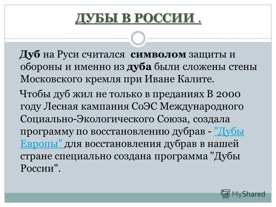 ДУБЫ В РОССИИ. Дуб на Руси считался символом защиты и обороны и именно из дуба были сложены стены Московского кремля при Иване Калите. Чтобы дуб жил не только в преданиях В 2000 году Лесная кампания СоЭС Международного Социально-Экологического Союза,