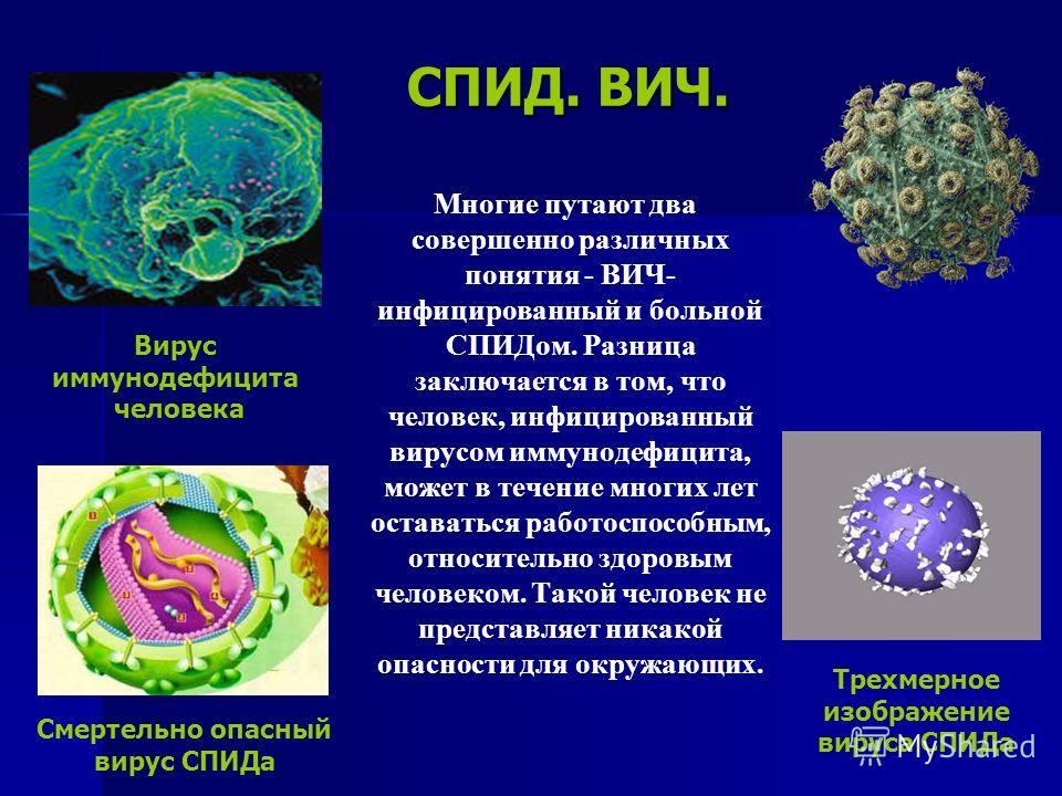 СПИД. ВИЧ. Многие путают два совершенно различных понятия - ВИЧ- инфицированный и больной СПИДом. Разница заключается в том, что человек, инфицированный вирусом иммунодефицита, может в течение многих лет оставаться работоспособным, относительно здоро