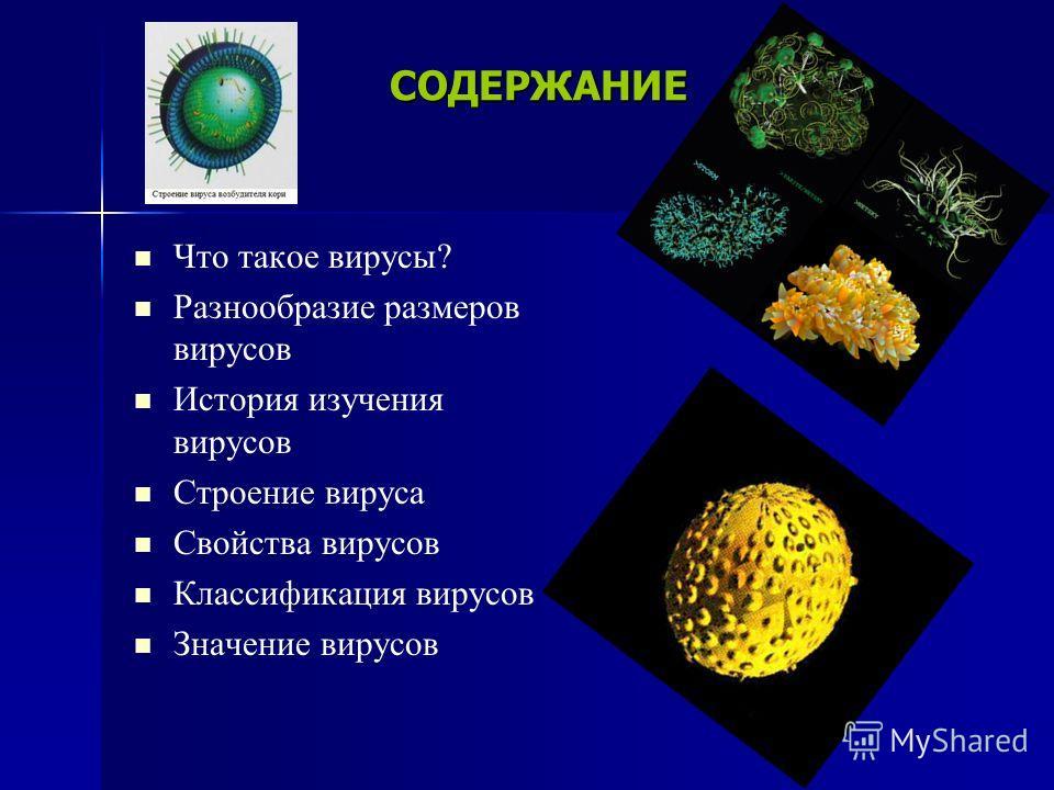 СОДЕРЖАНИЕ Что такое вирусы? Разнообразие размеров вирусов История изучения вирусов Строение вируса Свойства вирусов Классификация вирусов Значение вирусов