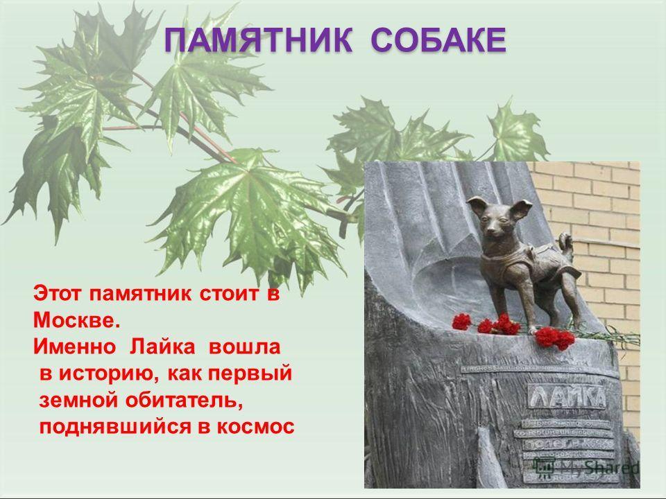 ПАМЯТНИК СОБАКЕ Этот памятник стоит в Москве. Именно Лайка вошла в историю, как первый земной обитатель, поднявшийся в космос