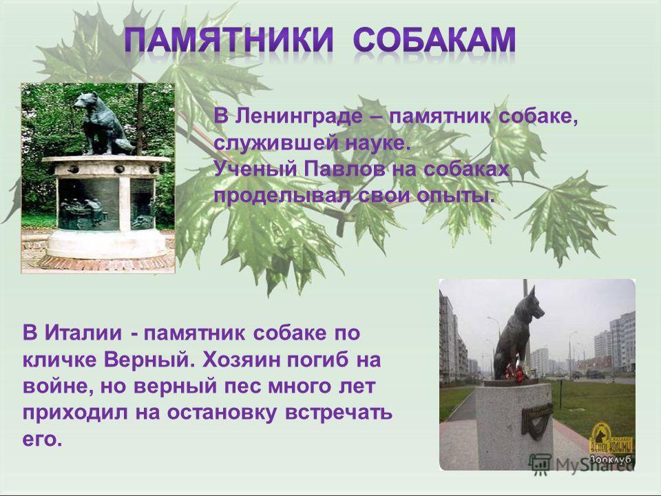 В Ленинграде – памятник собаке, служившей науке. Ученый Павлов на собаках проделывал свои опыты. В Италии - памятник собаке по кличке Верный. Хозяин погиб на войне, но верный пес много лет приходил на остановку встречать его.