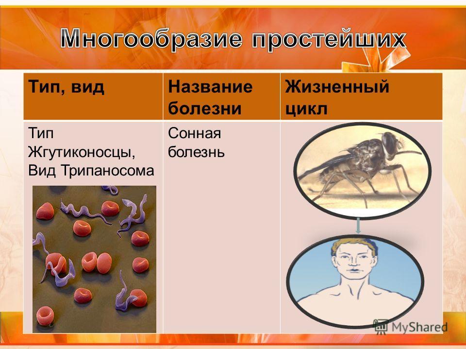 Тип, видНазвание болезни Жизненный цикл Тип Жгутиконосцы, Вид Трипаносома Сонная болезнь