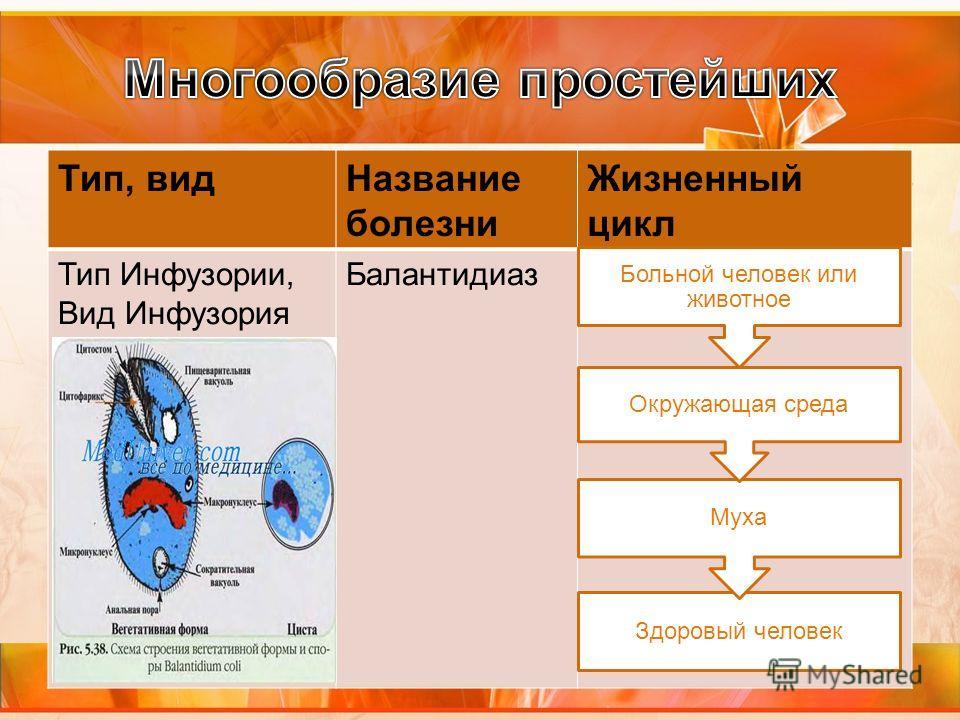 Тип, видНазвание болезни Жизненный цикл Тип Инфузории, Вид Инфузория балантидий Балантидиаз Здоровый человек Муха Окружающая среда Больной человек или животное