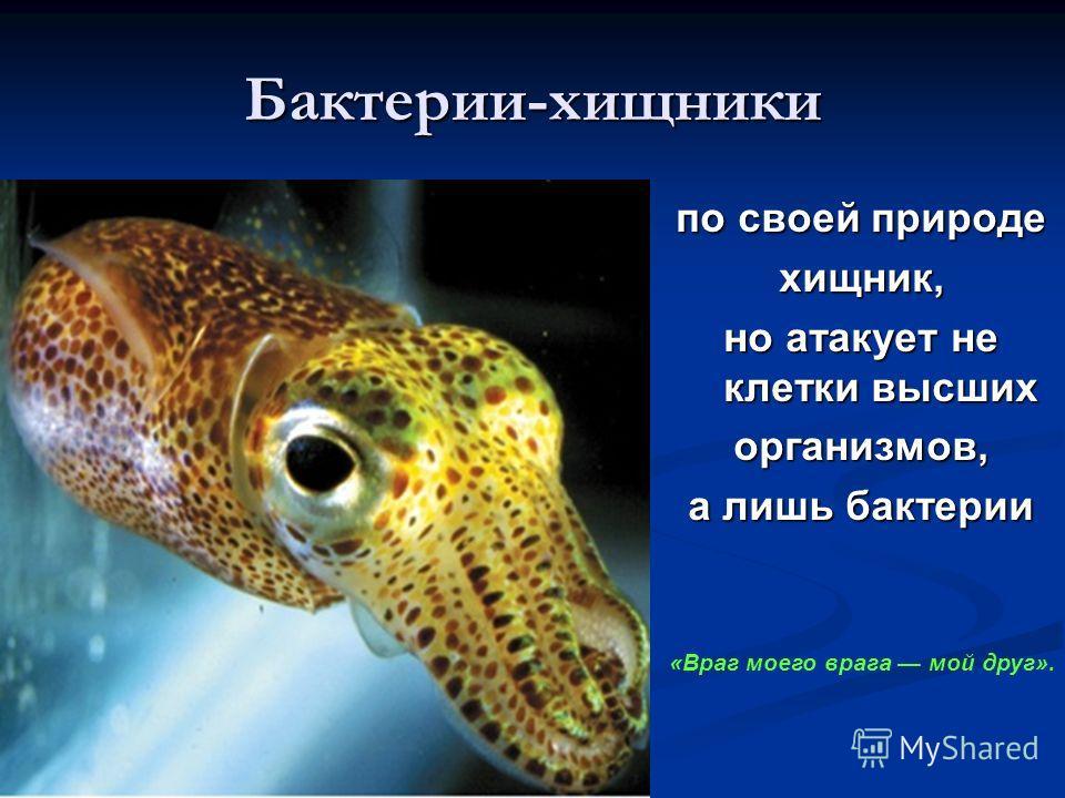 Бактерии-хищники по своей природе хищник, но атакует не клетки высших организмов, а лишь бактерии «Враг моего врага мой друг».