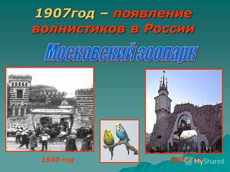 1907год – появление волнистиков в России 1930 год2009 год