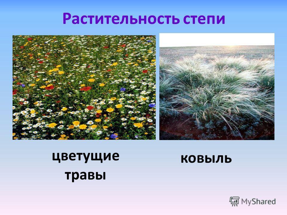 Растительность степи ковыль цветущие травы