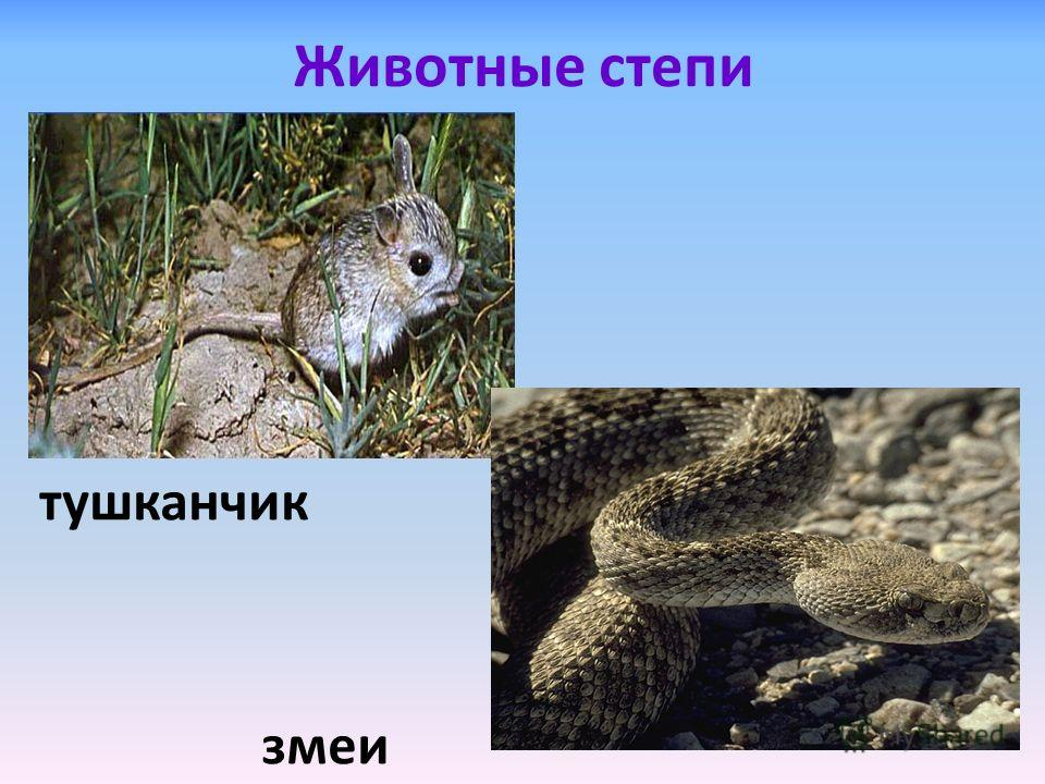 Животные степи тушканчик змеи