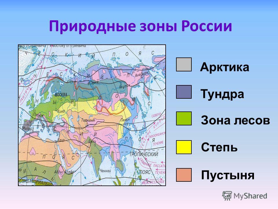Природные зоны России Арктика Тундра Зона лесов Степь Пустыня
