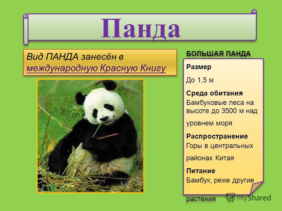 Панда Панда БОЛЬШАЯ ПАНДА. Размер. До 1,5 м Среда обитания. Бамбуковые леса на высоте до 3500 м над уровнем моря Распространение. Горы в центральных районах Китая Питание. Бамбук, реже другие растения БОЛЬШАЯ ПАНДА. Размер. До 1,5 м Среда обитания. Б
