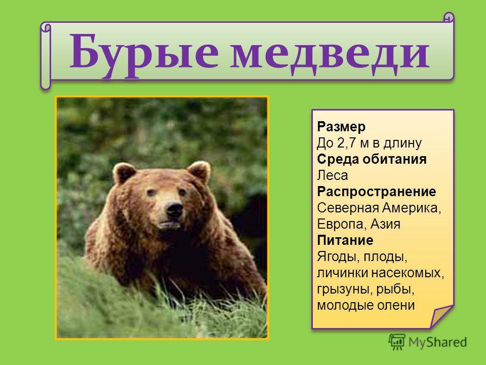 Бурые медведи Размер. До 2,7 м в длину Среда обитания. Леса Распространение. Северная Америка, Европа, Азия Питание. Ягоды, плоды, личинки насекомых, грызуны, рыбы, молодые олени Размер. До 2,7 м в длину Среда обитания. Леса Распространение. Северная