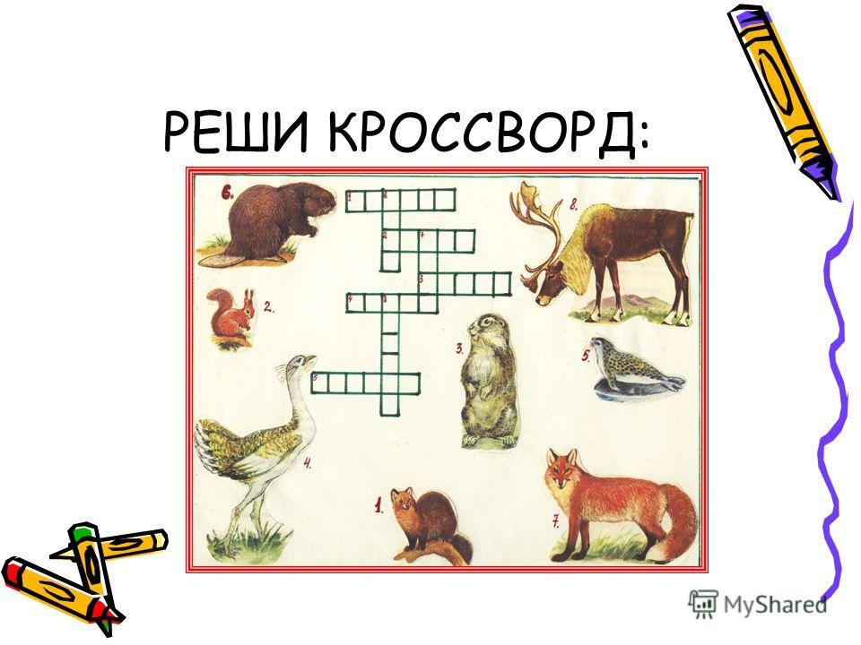 РЕШИ КРОССВОРД: