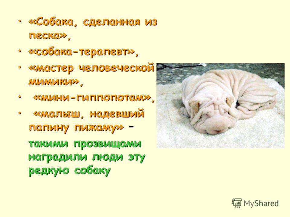 «Собака, сделанная из песка», «собака-терапевт», «мастер человеческой мимики», « «мини-гиппопотам», малыш, надевший папину пижаму» – такими прозвищами наградили люди эту редкую собаку