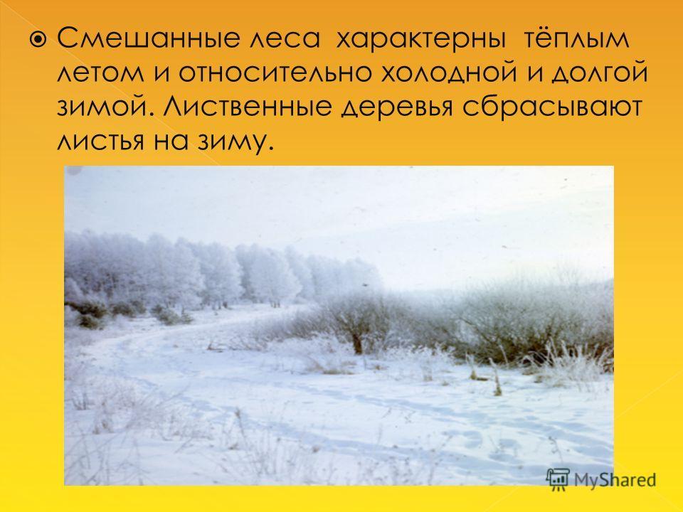 Смешанные леса характерны тёплым летом и относительно холодной и долгой зимой. Лиственные деревья сбрасывают листья на зиму.