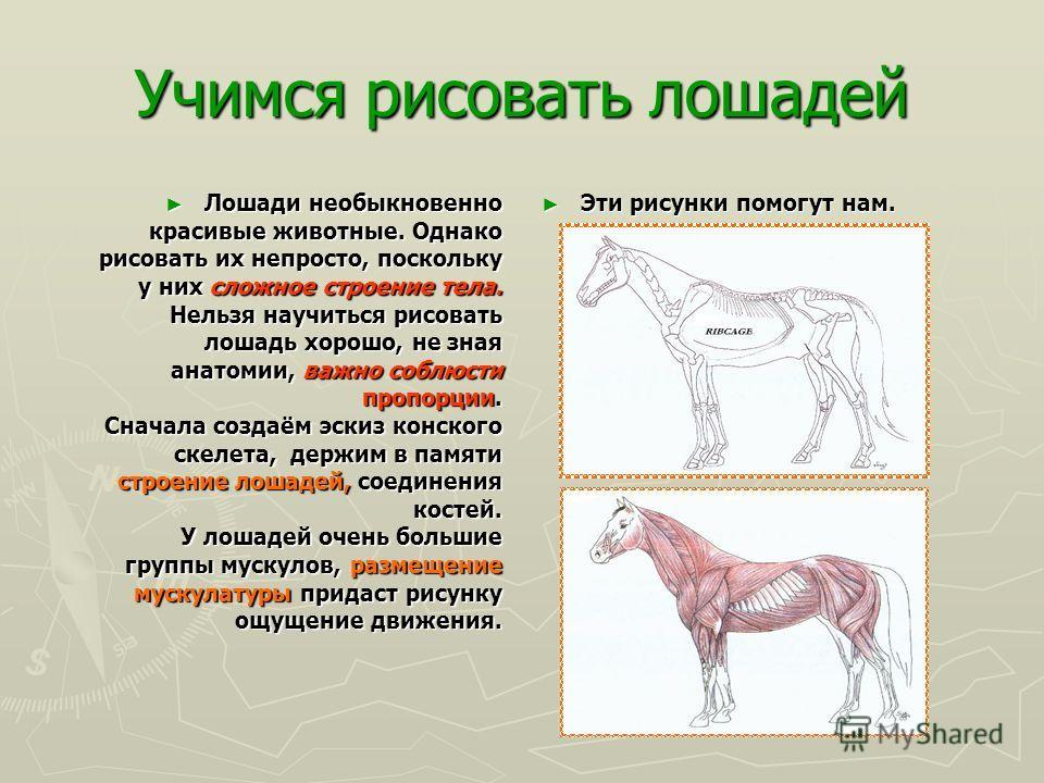 Рекорды у лошадей Самая крупная порода – першерон. Самая крупная порода – першерон. Самая маленькая лошадь – фалабелла. Самая маленькая лошадь – фалабелла. Самая большая развиваемая скорость – Самая большая развиваемая скорость – 69,2 км/ч. 69,2 км/ч