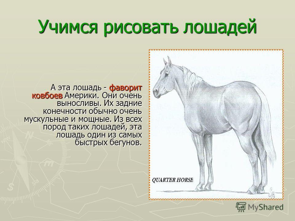 Учимся рисовать лошадей Многие столетия, люди развили сотни специализированных пород лошадей. У нас есть лошади для перетаскивания телег, плугов, лошади для рыцарей и героев. Есть также лошади для скачек. У нас есть крошечные породы пони. Каждая поро