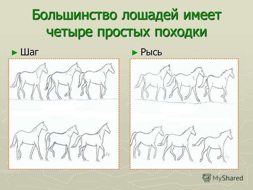 Учимся рисовать лошадей Аравиец - возможно один из самых старых и наиболее красивых пород лошадей. Аравийцы выращены в пустыне очень выносливые. Хотя они - не самая быстрая порода, Аравийцы – фавориты скачек, которые конкурируют в бегах из-за своей в