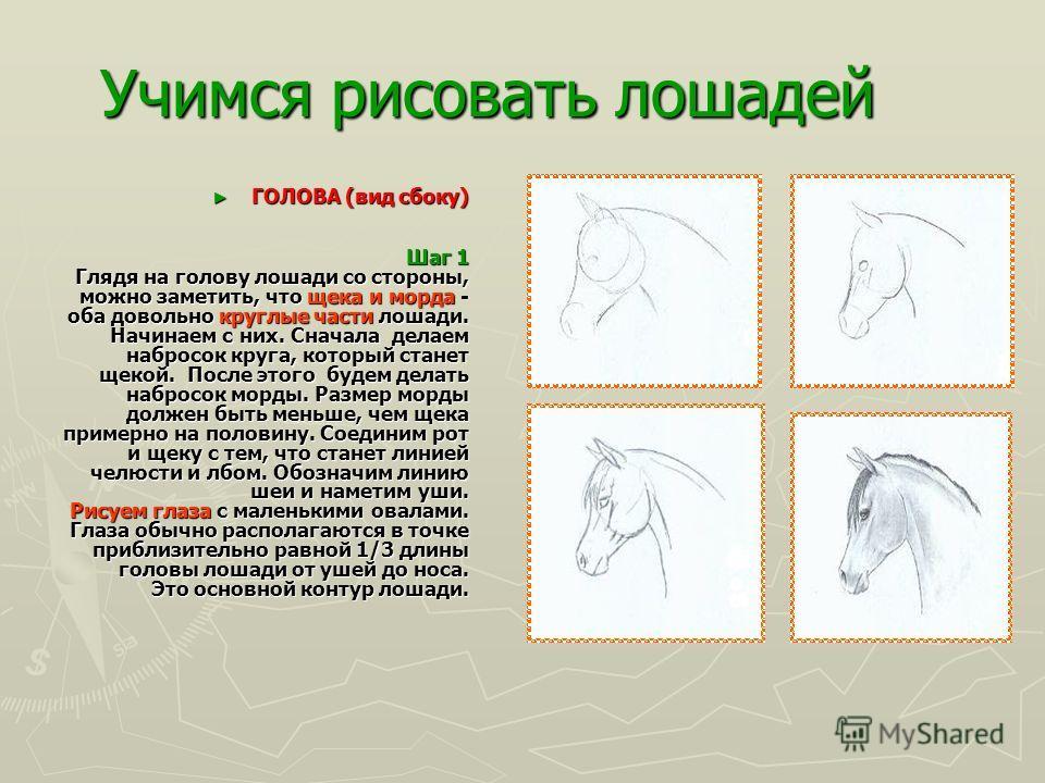 Учимся рисовать лошадей Лошади также имеют широкое разнообразие других движений. Они перемещаются в сторону, по диагонали, они брыкаются, они шаловливы. Лошади также имеют широкое разнообразие других движений. Они перемещаются в сторону, по диагонали