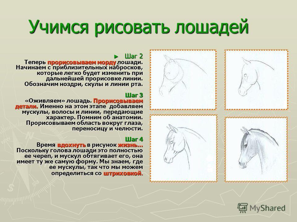 Учимся рисовать лошадей ГОЛОВА (вид сбоку) Шаг 1 Глядя на голову лошади со стороны, можно заметить, что щека и морда - оба довольно круглые части лошади. Начинаем с них. Сначала делаем набросок круга, который станет щекой. После этого будем делать на
