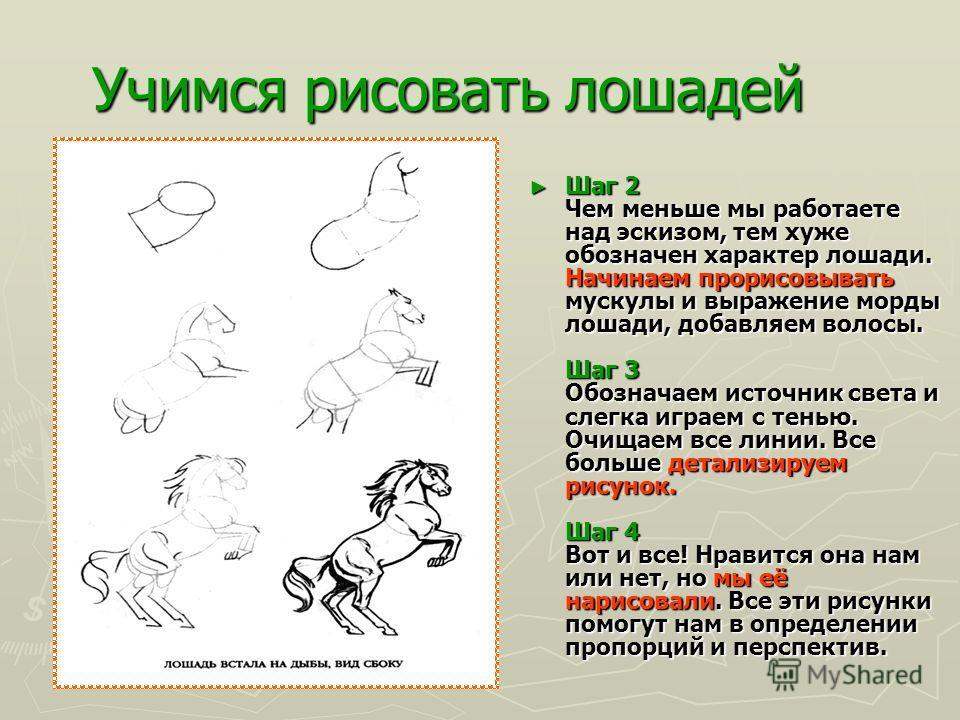 Учимся рисовать лошадей РИСУЕМ ТУЛОВИЩЕ В строении лошади есть много круглых областей. Мы можем обозначить их кругами и овалами. Это относится и к туловищу тоже. Шаг 1 Начнём с грудной клетки, обозначив каждую ее половину овалами. Определим место, гд