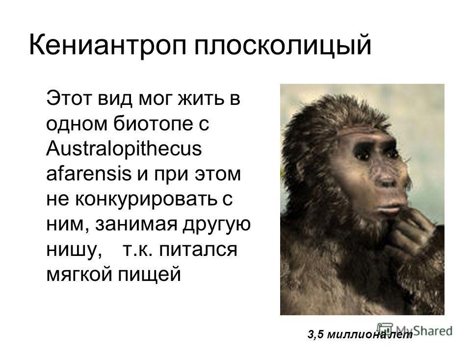 Кениантроп плосколицый Этот вид мог жить в одном биотопе с Australopithecus afarensis и при этом не конкурировать с ним, занимая другую нишу, т.к. питался мягкой пищей 3,5 миллиона лет