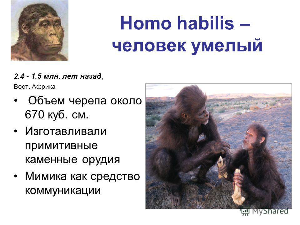 Homo habilis – человек умелый 2.4 - 1.5 млн. лет назад, Вост. Африка Объем черепа около 670 куб. см. Изготавливали примитивные каменные орудия Мимика как средство коммуникации