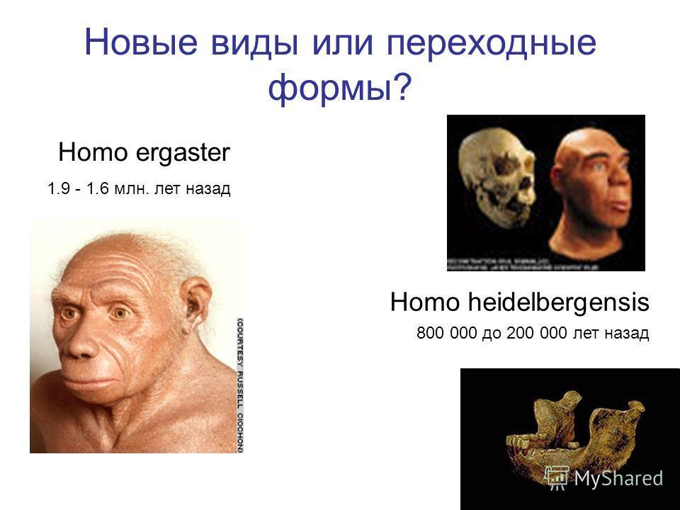 Новые виды или переходные формы? Homo ergaster Homo heidelbergensis 800 000 до 200 000 лет назад 1.9 - 1.6 млн. лет назад