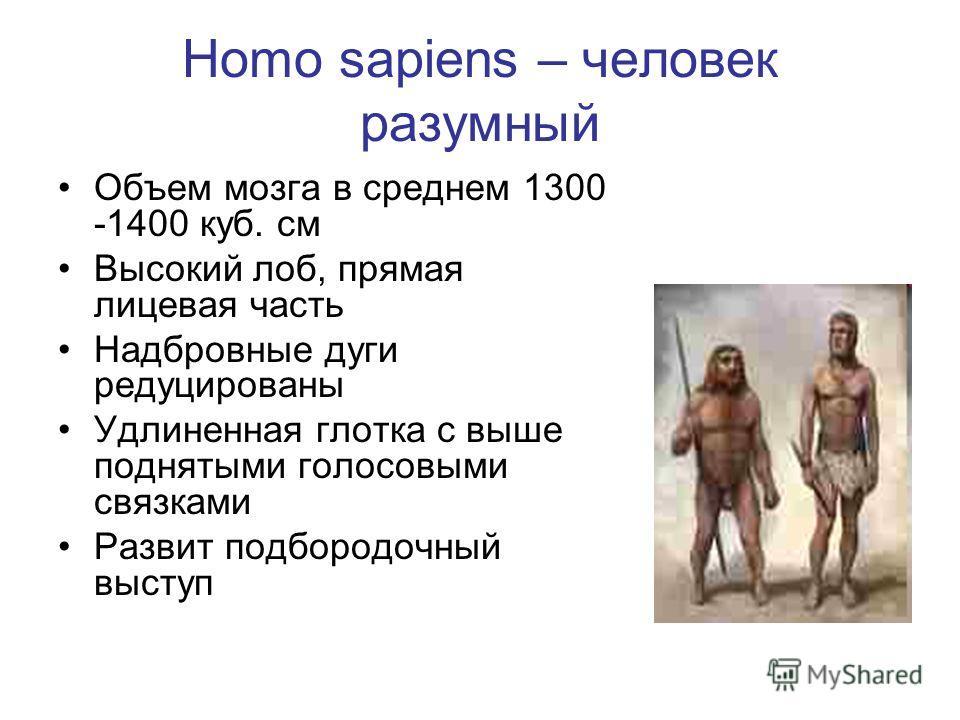 Homo sapiens – человек разумный Объем мозга в среднем 1300 -1400 куб. см Высокий лоб, прямая лицевая часть Надбровные дуги редуцированы Удлиненная глотка с выше поднятыми голосовыми связками Развит подбородочный выступ