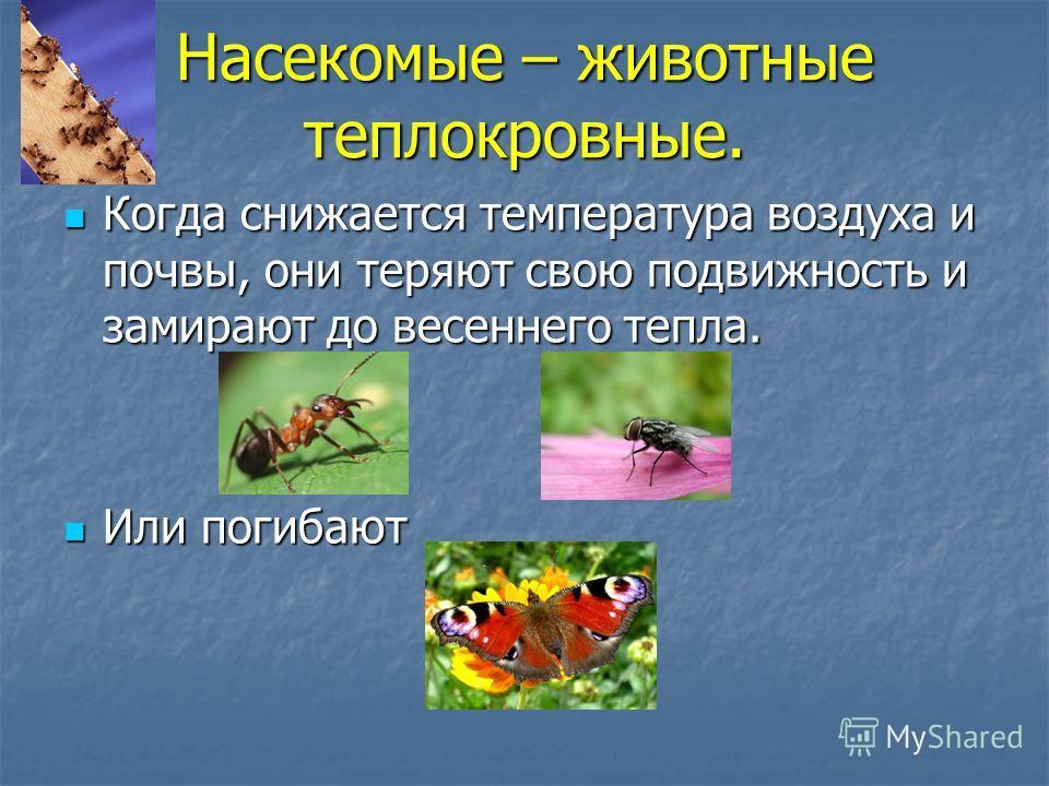 Насекомые – животные теплокровные. Когда снижается температура воздуха и почвы, они теряют свою подвижность и замирают до весеннего тепла. Когда снижается температура воздуха и почвы, они теряют свою подвижность и замирают до весеннего тепла. Или пог