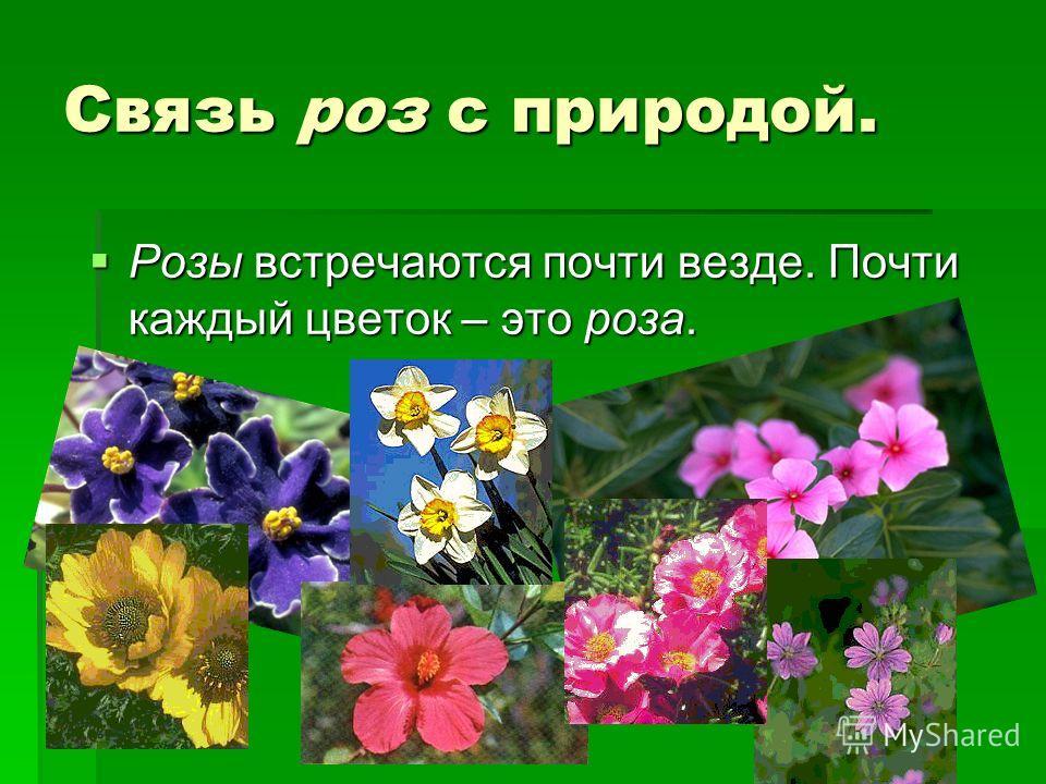 Связь роз с природой. Розы встречаются почти везде. Почти каждый цветок – это роза. Розы встречаются почти везде. Почти каждый цветок – это роза.