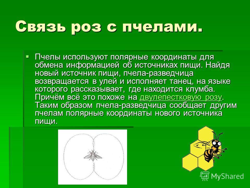Связь роз с пчелами. Пчелы используют полярные координаты для обмена информацией об источниках пищи. Найдя новый источник пищи, пчела-разведчица возвращается в улей и исполняет танец, на языке которого рассказывает, где находится клумба. Причём всё э