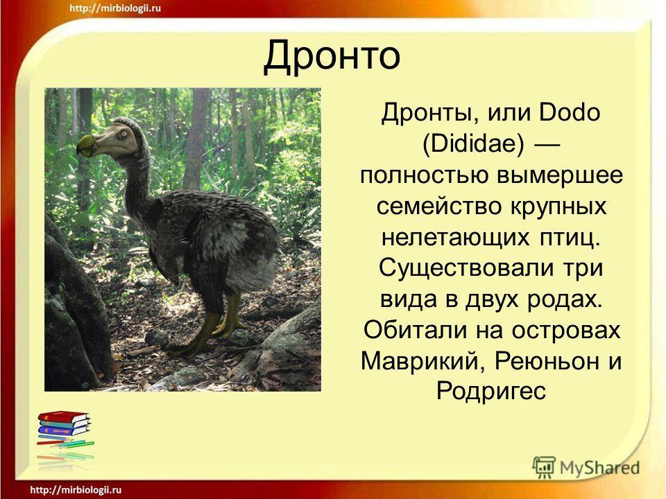 Дронто Дронты, или Dodo (Dididae) полностью вымершее семейство крупных нелетающих птиц. Существовали три вида в двух родах. Обитали на островах Маврикий, Реюньон и Родригес