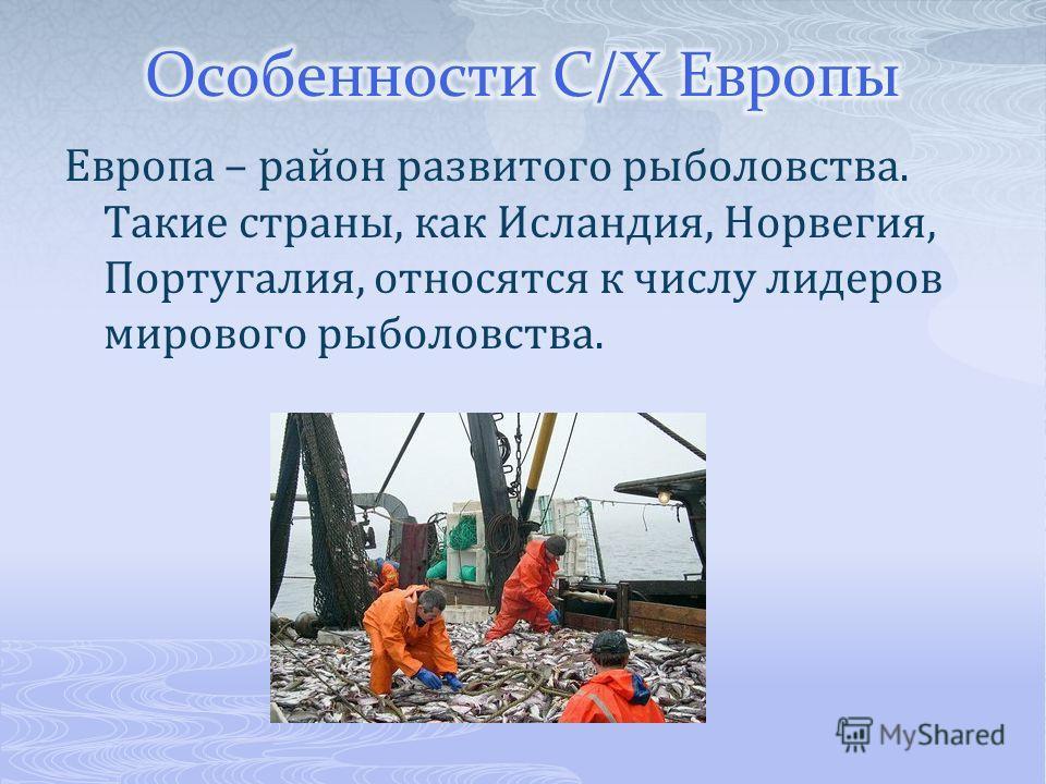 Европа – район развитого рыболовства. Такие страны, как Исландия, Норвегия, Португалия, относятся к числу лидеров мирового рыболовства.