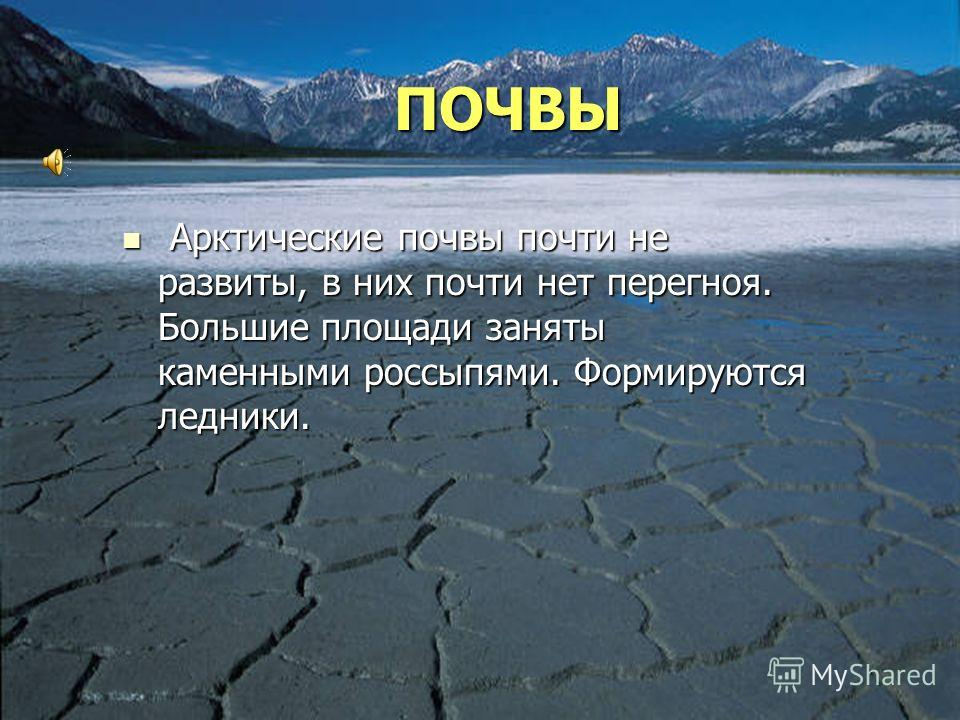 the arctic zone essay