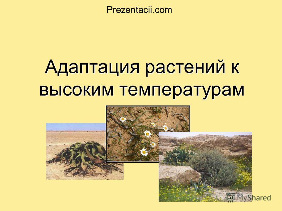 Адаптация растений к высоким температурам. Prezentacii.com