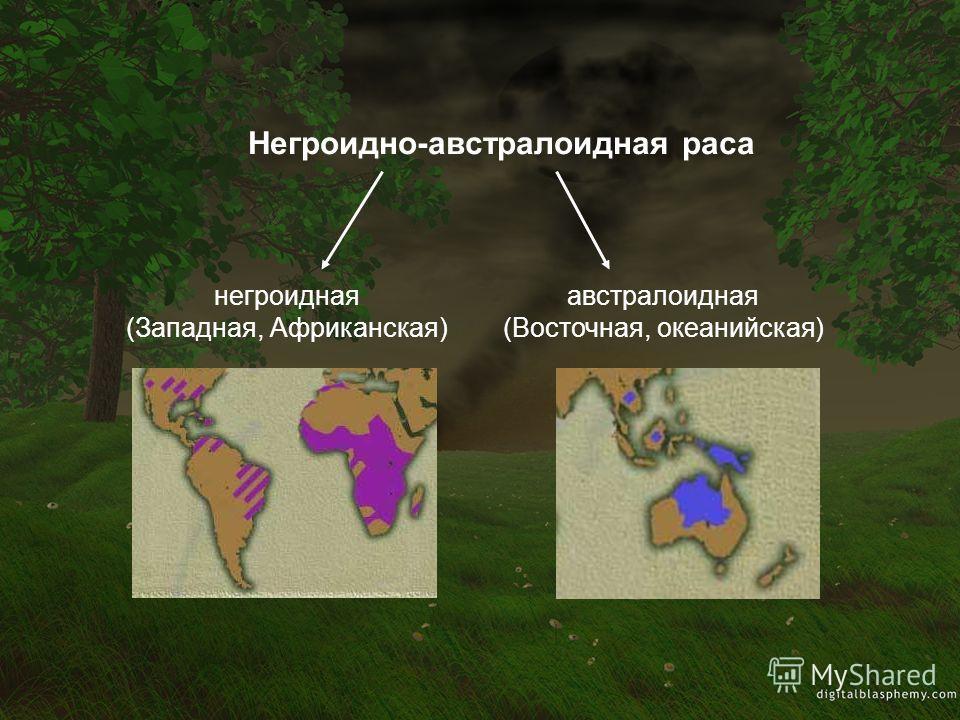 негроидная (Западная, Африканская) австралоидная (Восточная, океанийская)