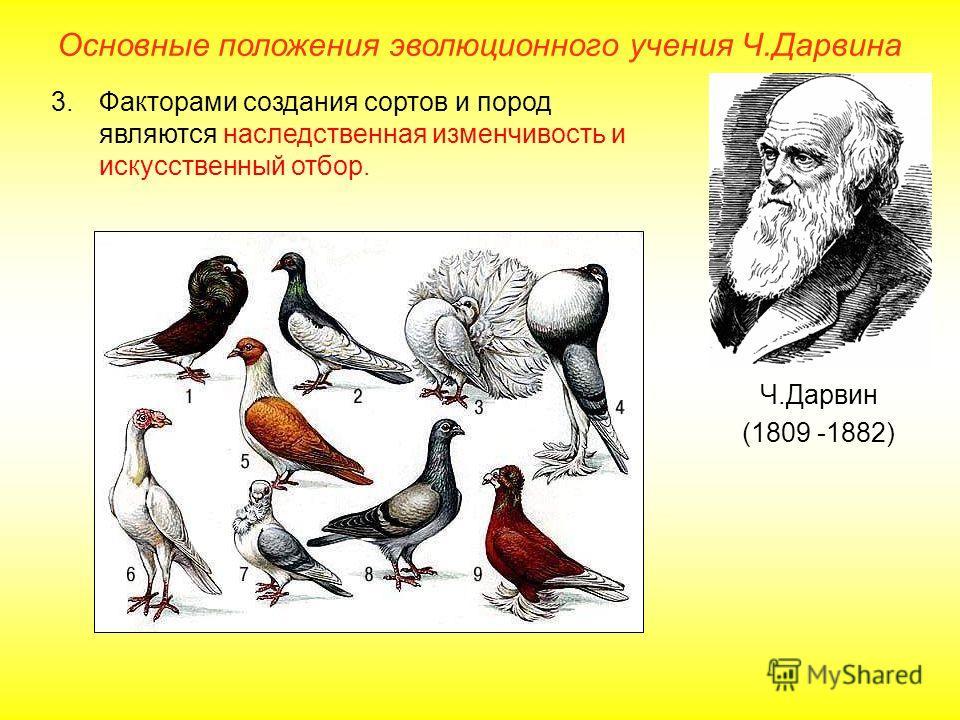 Основные положения эволюционного учения Ч.Дарвина Ч.Дарвин (1809 -1882) 3.Факторами создания сортов и пород являются наследственная изменчивость и искусственный отбор.