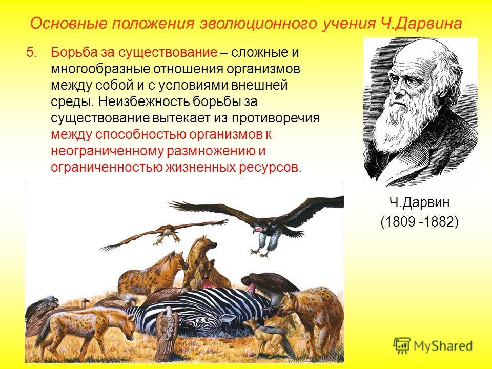 Основные положения эволюционного учения Ч.Дарвина Ч.Дарвин (1809 -1882) 5.Борьба за существование – сложные и многообразные отношения организмов между собой и с условиями внешней среды. Неизбежность борьбы за существование вытекает из противоречия ме