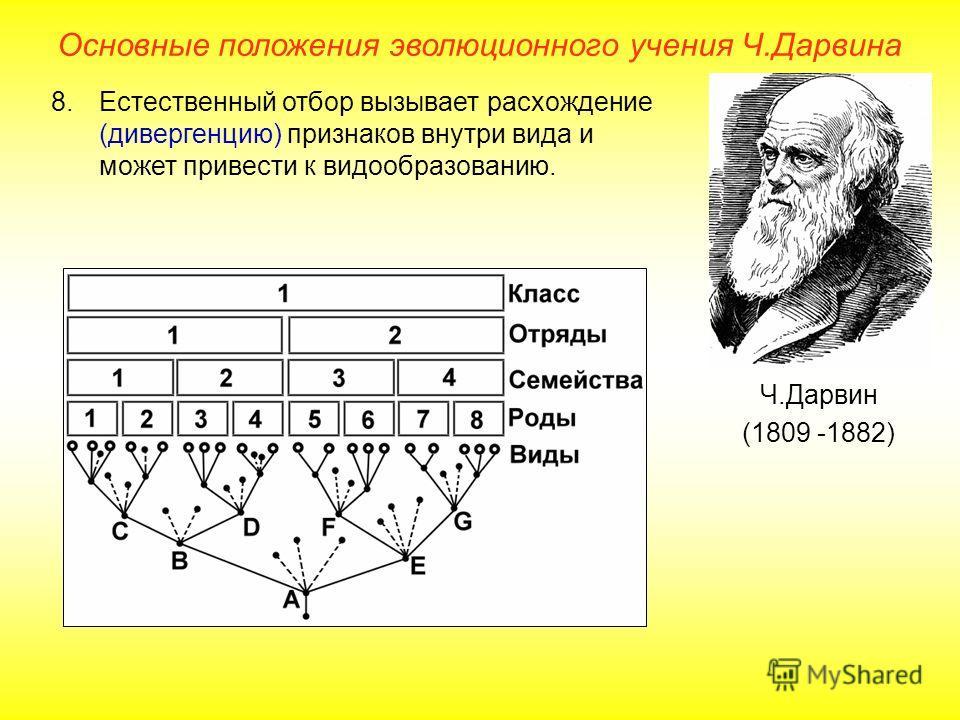Основные положения эволюционного учения Ч.Дарвина Ч.Дарвин (1809 -1882) 8.Естественный отбор вызывает расхождение (дивергенцию) признаков внутри вида и может привести к видообразованию.