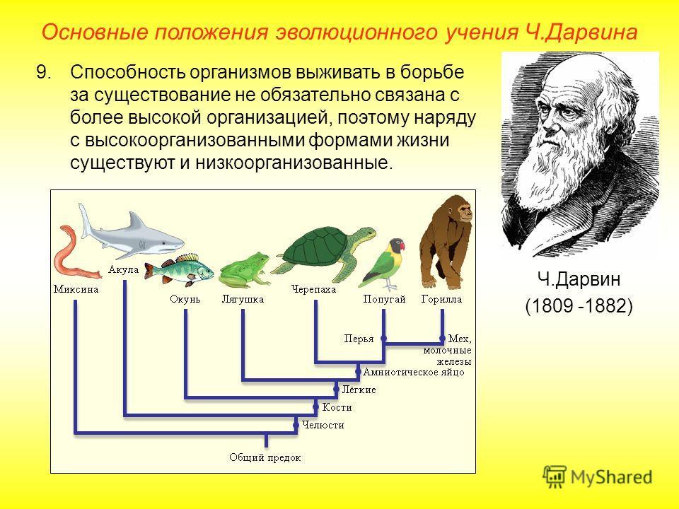 Основные положения эволюционного учения Ч.Дарвина Ч.Дарвин (1809 -1882) 9.Способность организмов выживать в борьбе за существование не обязательно связана с более высокой организацией, поэтому наряду с высокоорганизованными формами жизни существуют и