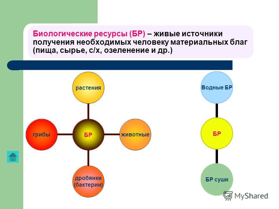 Биологические ресурсы (БР) – живые источники получения необходимых человеку материальных благ (пища, сырье, с/х, озеленение и др.) БР растенияживотные дробянки (бактерии) грибы БР Водные БР БР суши