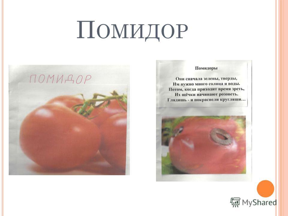 П ОМИДОР
