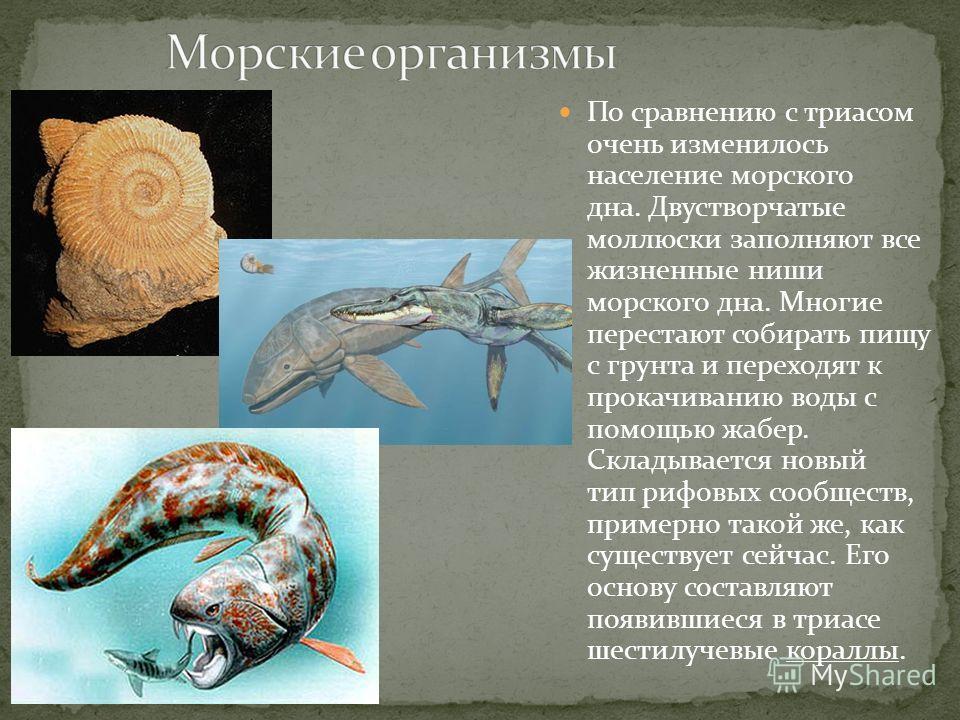 По сравнению с триасом очень изменилось население морского дна. Двустворчатые моллюски заполняют все жизненные ниши морского дна. Многие перестают собирать пищу с грунта и переходят к прокачиванию воды с помощью жабер. Складывается новый тип рифовых